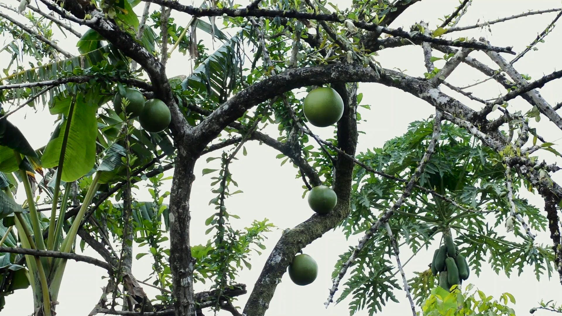 Fruit Bearing Trees