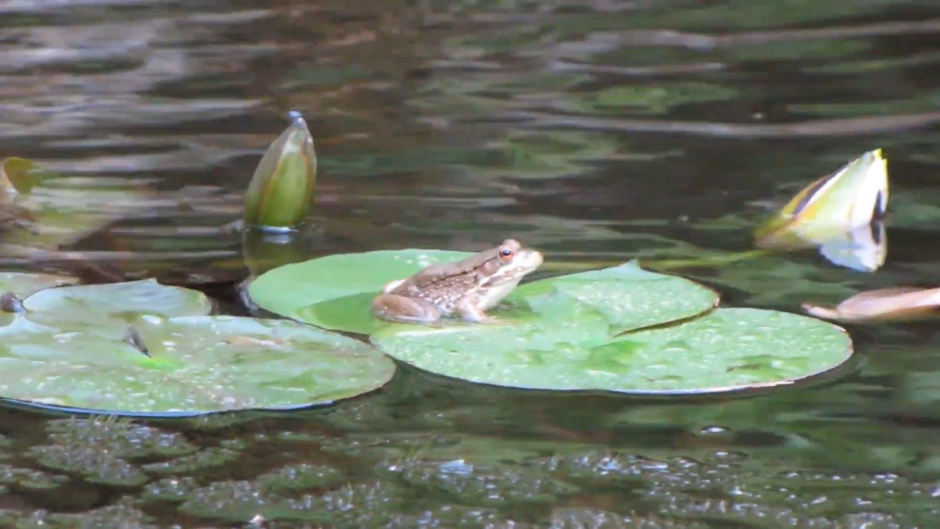 A Frog On A Leaf