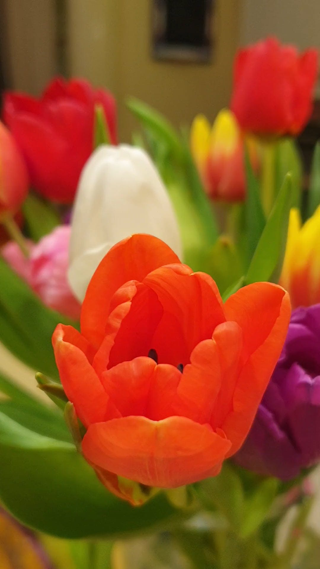 Variety Of Tulip Flowers