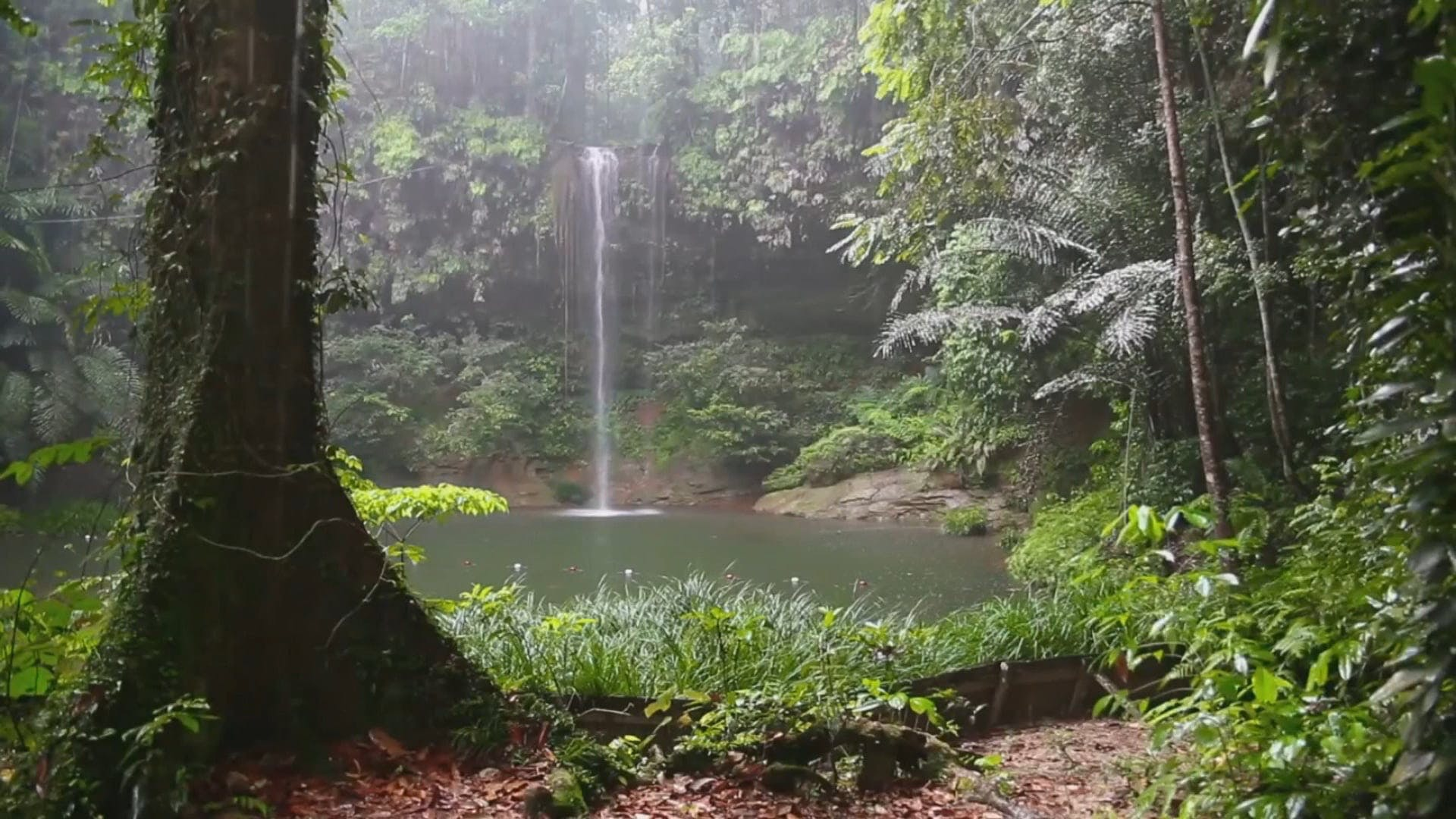 View Of The Woods With Waterfalls On A Rainy Day
