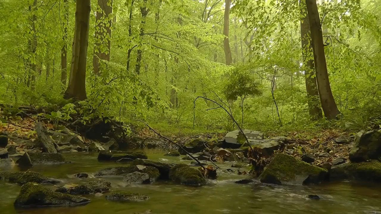 View Of The Woods With River And Mossy Rocks