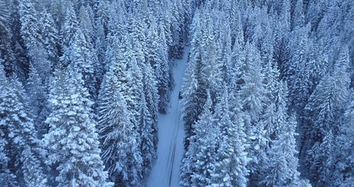 Car Drives in the Snow Through a Forest