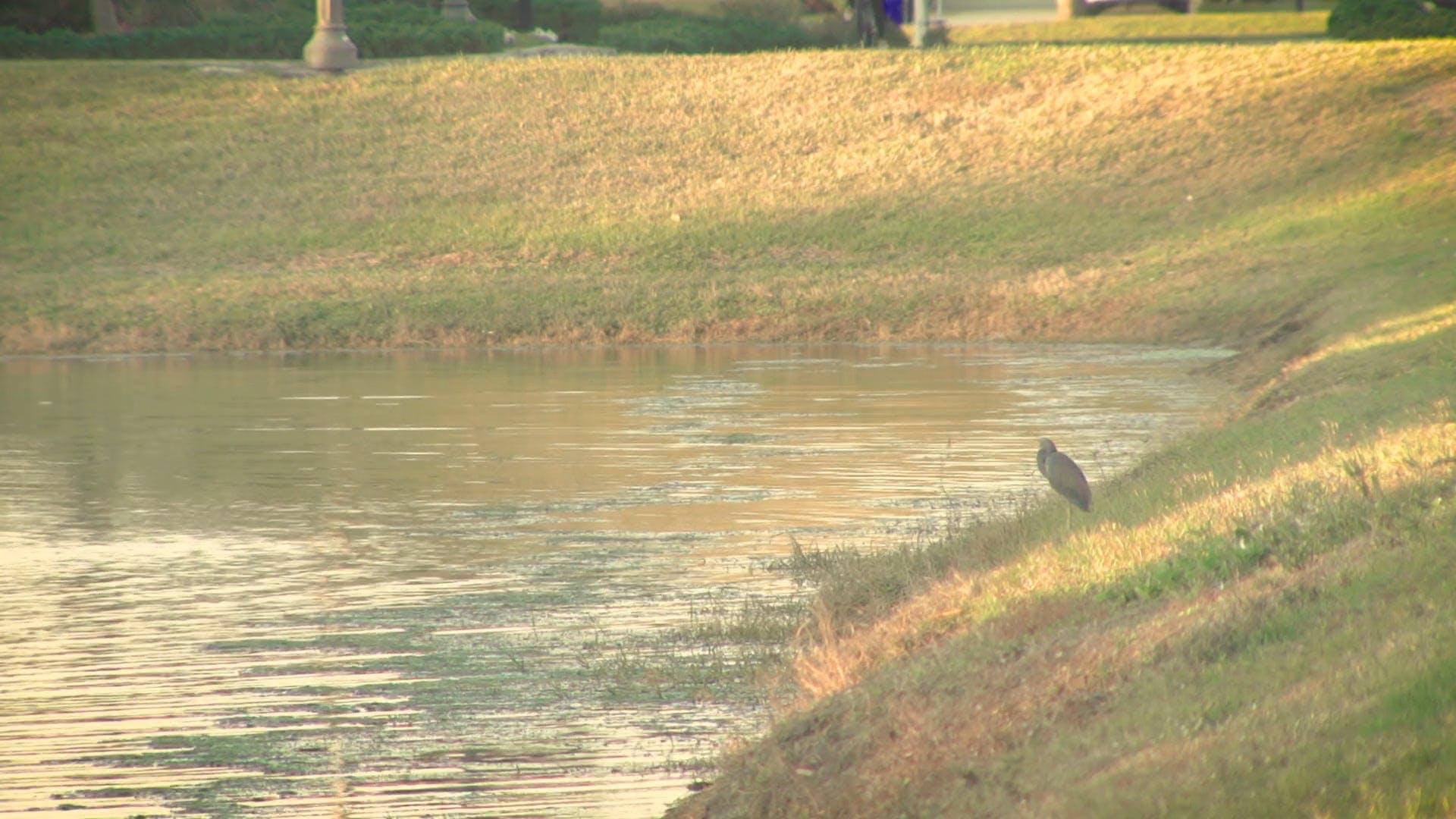 Bird On The Grass Near Lake
