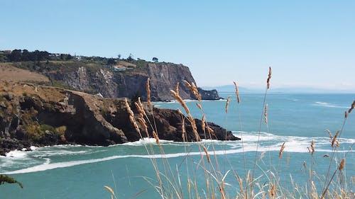 新西蘭海岸的平靜景色