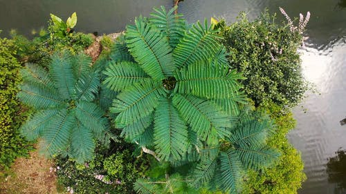 Top View Of Green Fern Leaves