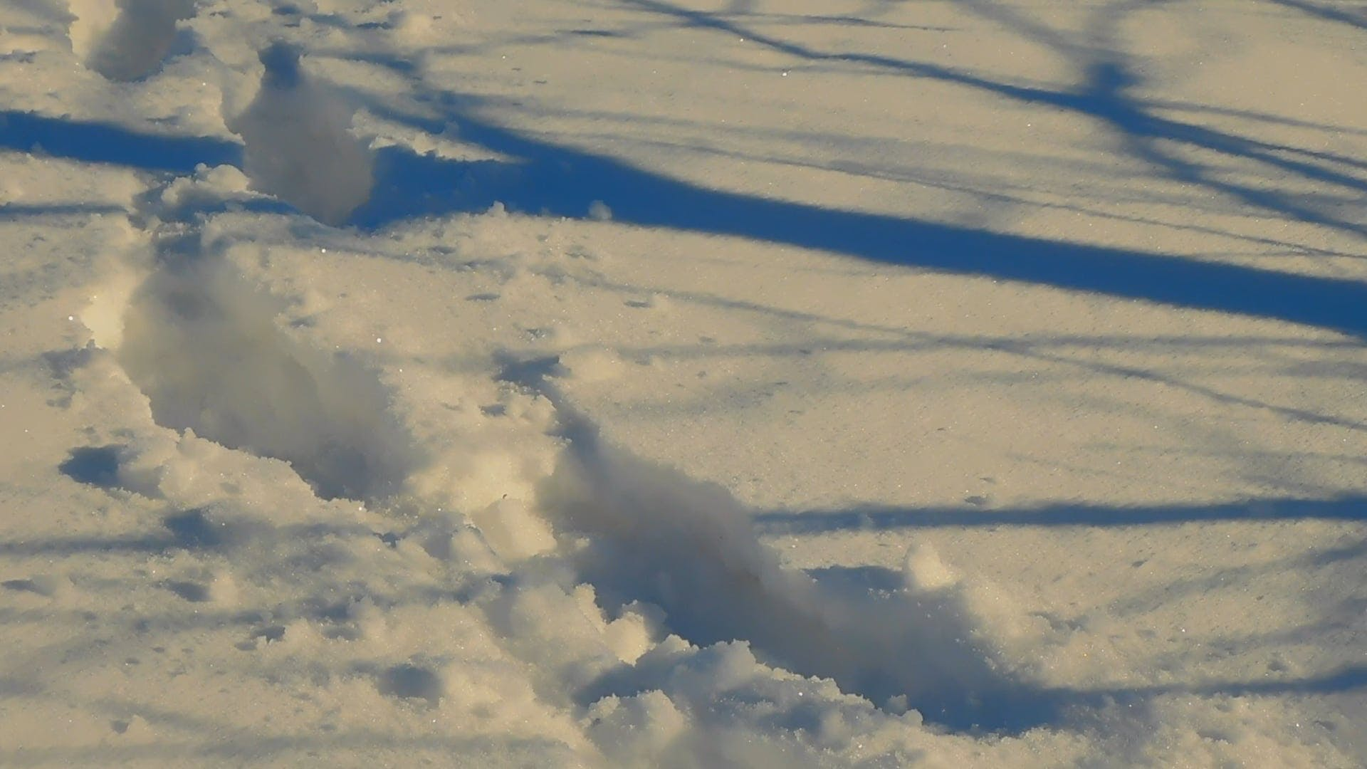 Foot Tracks In The Snow