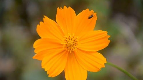 A Blooming Orange Flower