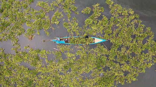 Aerial Shot Of Man On A Boat