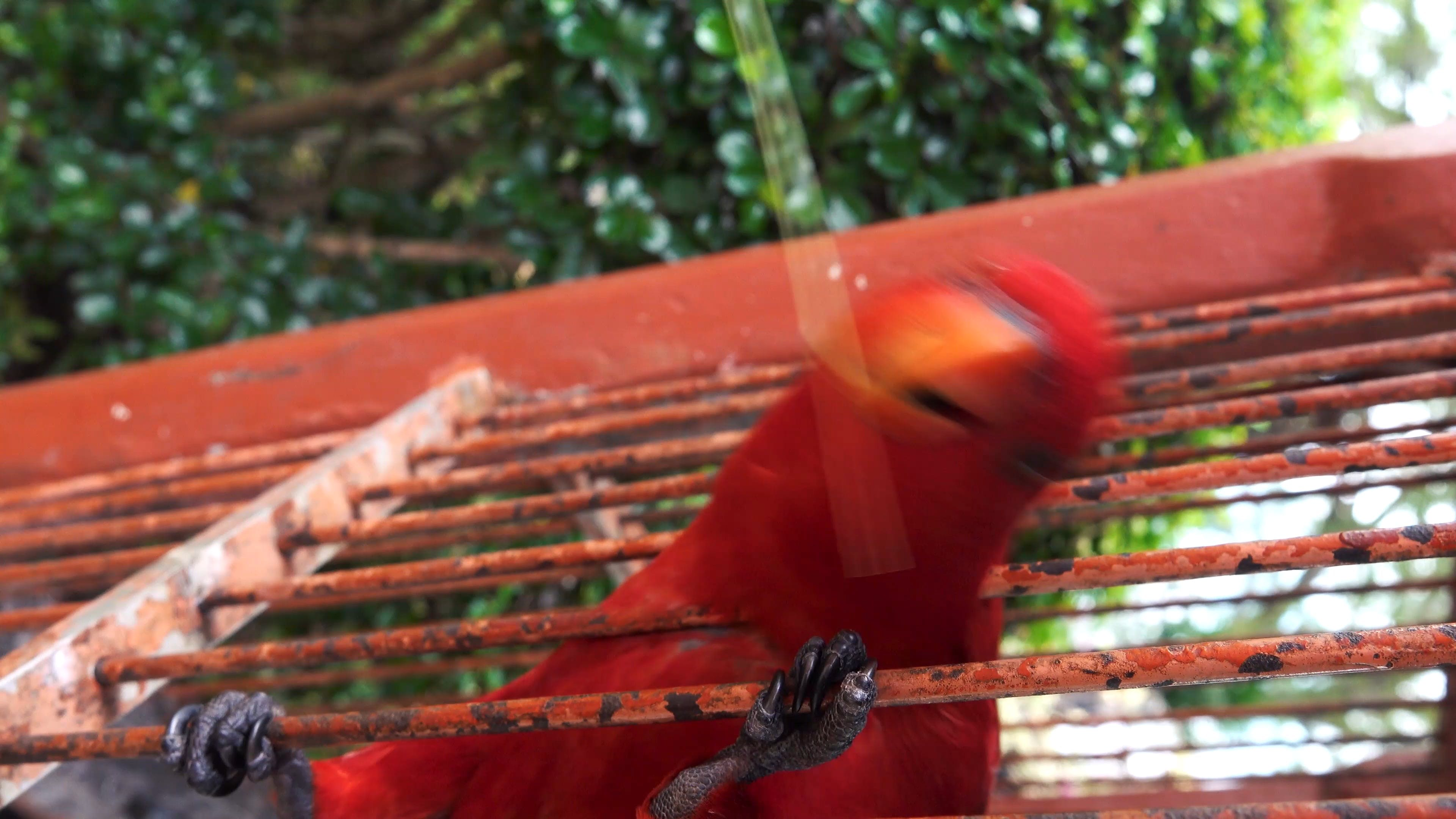Close-Up View Of A Red Parrot