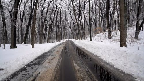 Wet Road Between A Snow Covered Woods