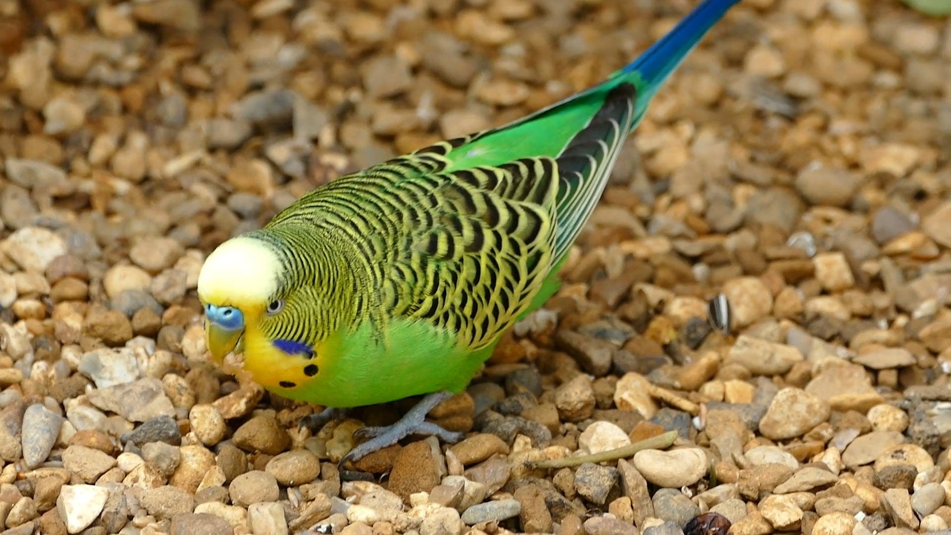 Close-Up View OF A Multi Colored Bird