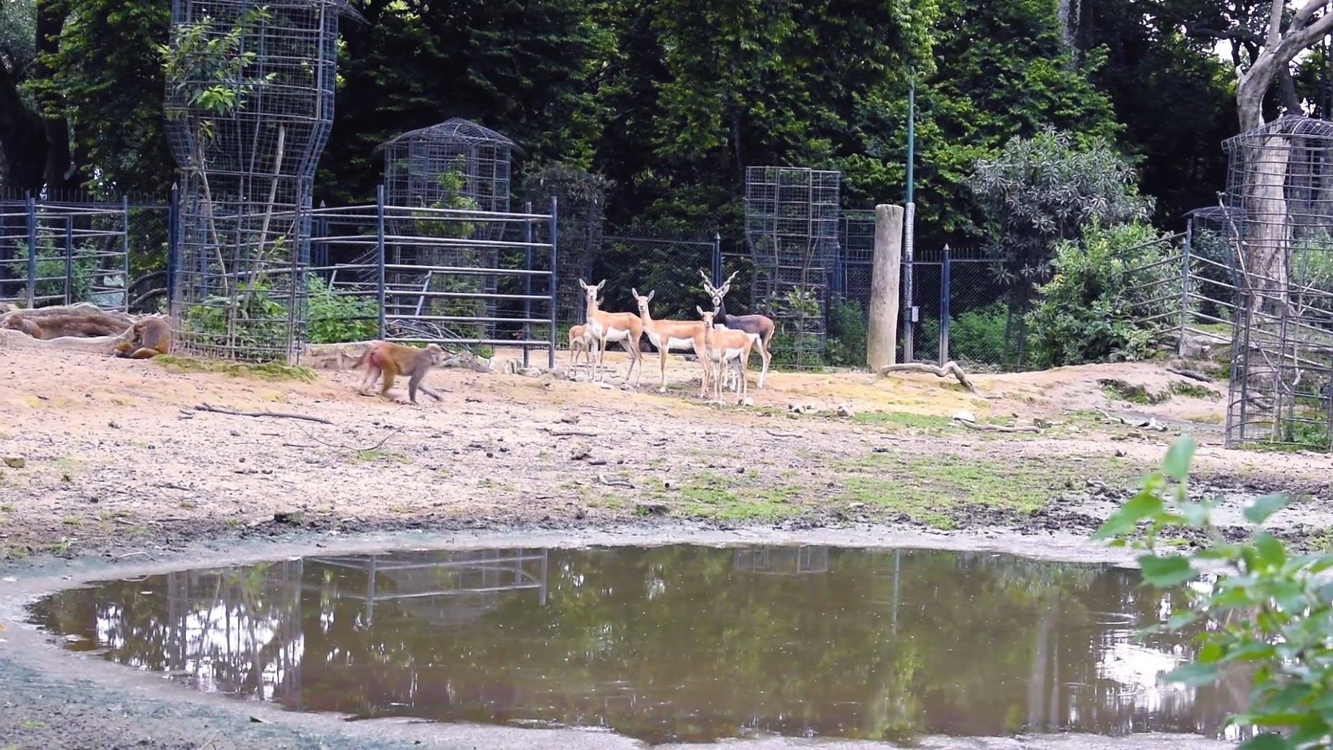 Group Of Animals In A Wildlife Park