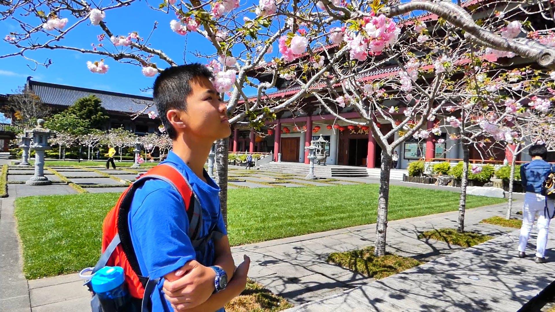 Boy Looking At Flowering Tree