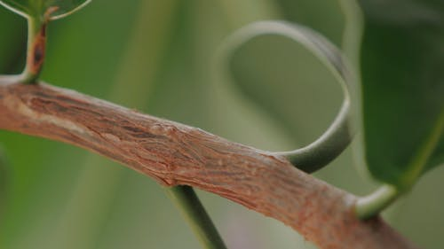 Close-up View Of A Tree Branch With Leaves