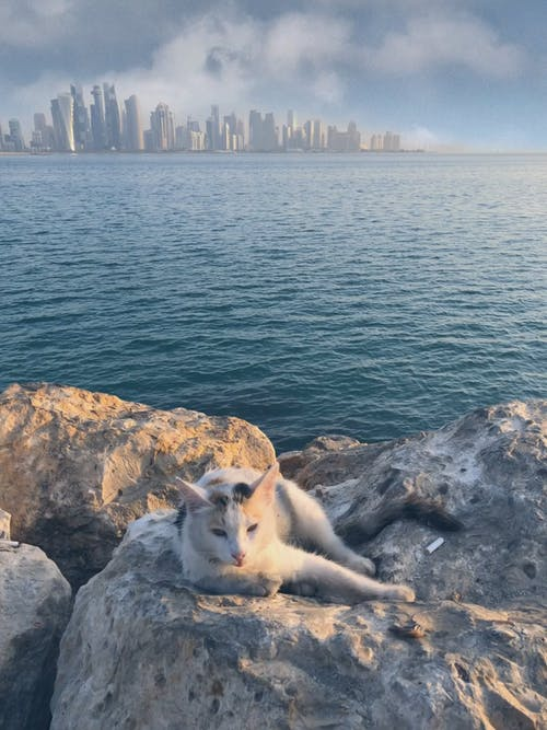 Cat Lying On Rock With City Background
