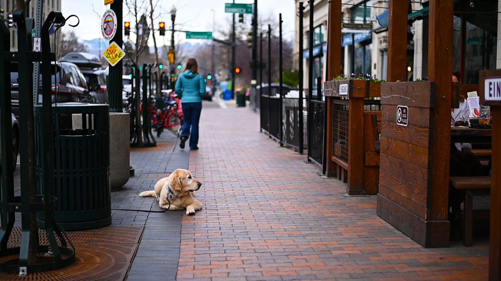 Dog Waiting Along The Sidewalk