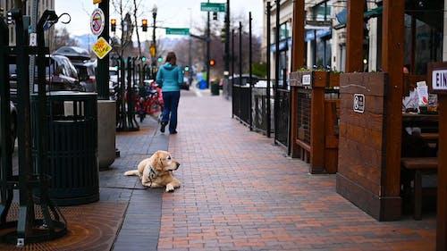 Dog Waiting Along The Sidewalk