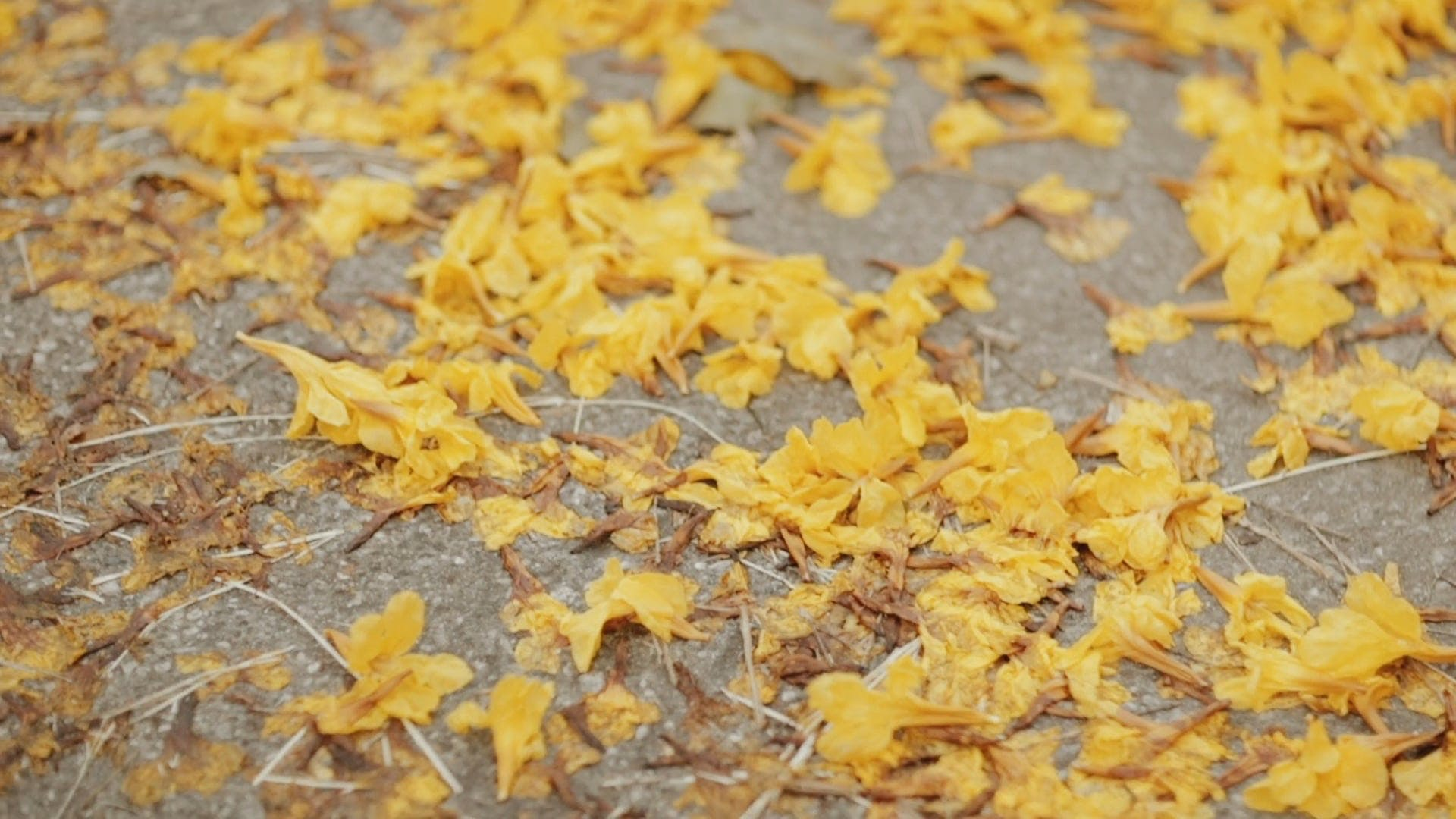 Fallen Autumn Leaves On The Road