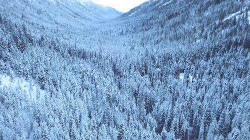 冬の針葉樹の眺め