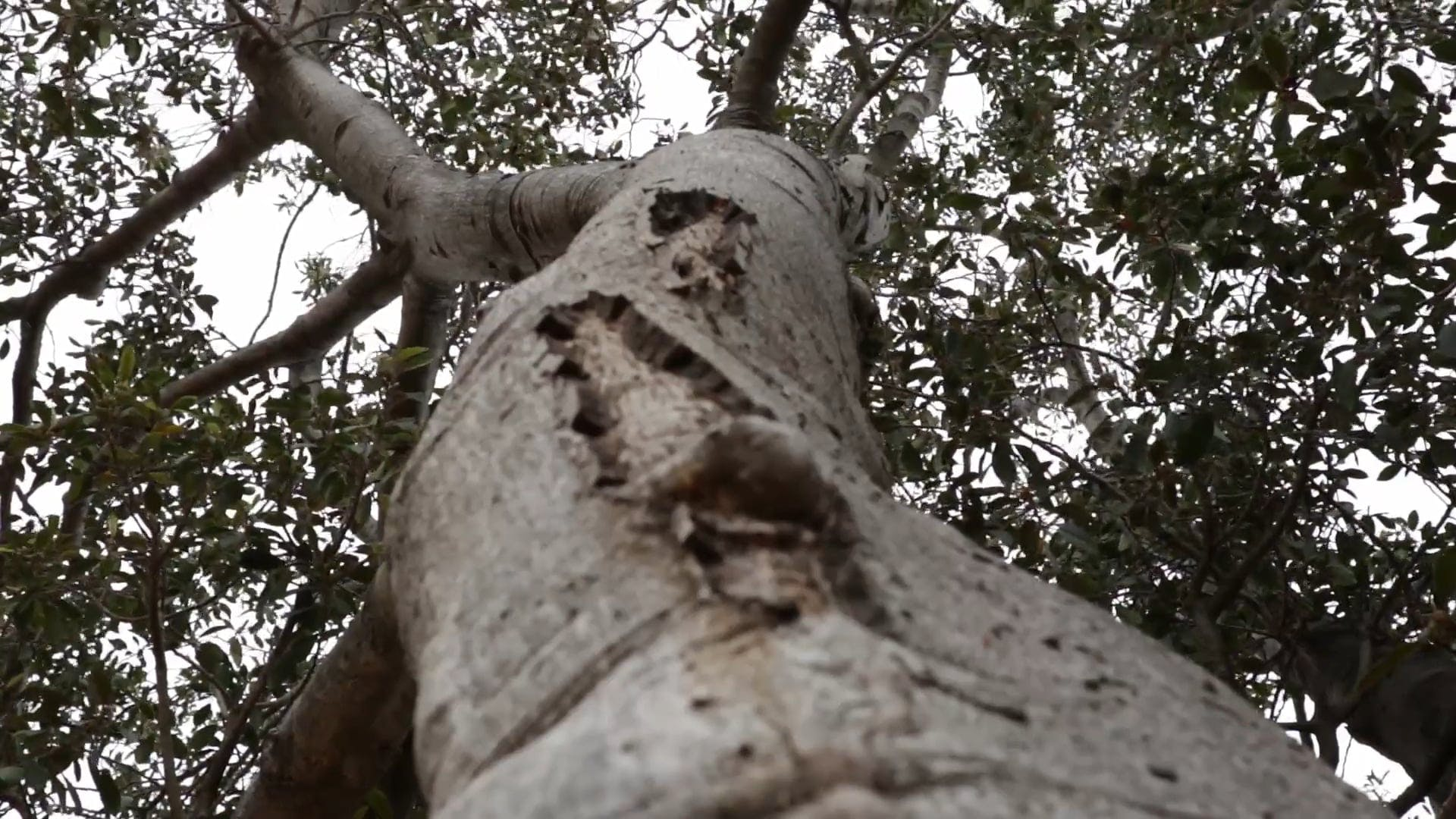 Low Angle Shot Of A Tree