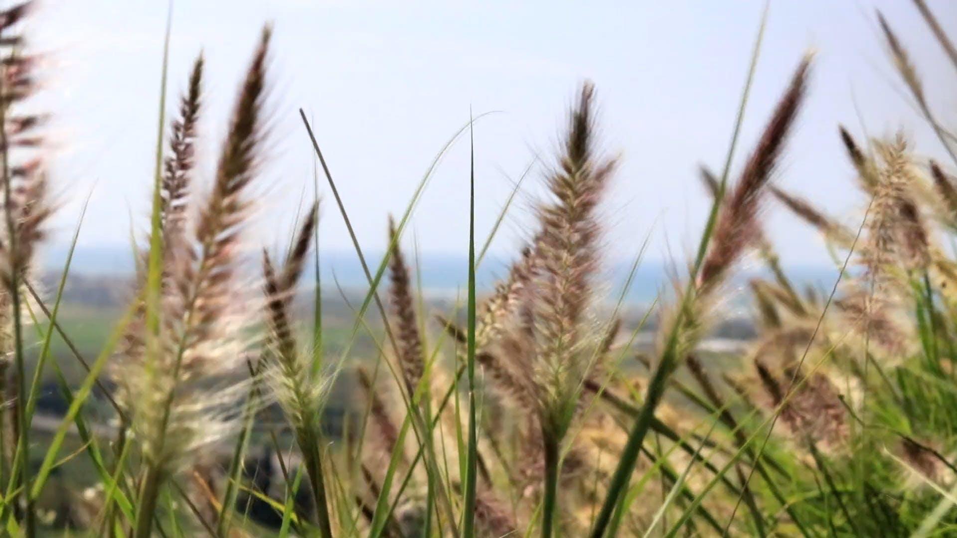 Video Of Grassland