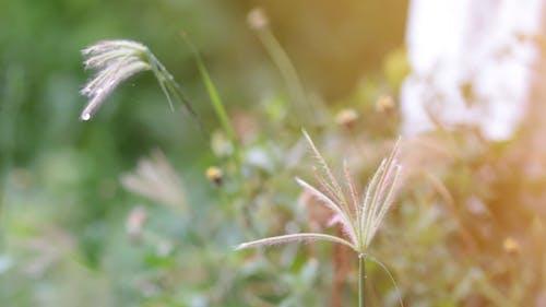 Rain Drops On A Grass