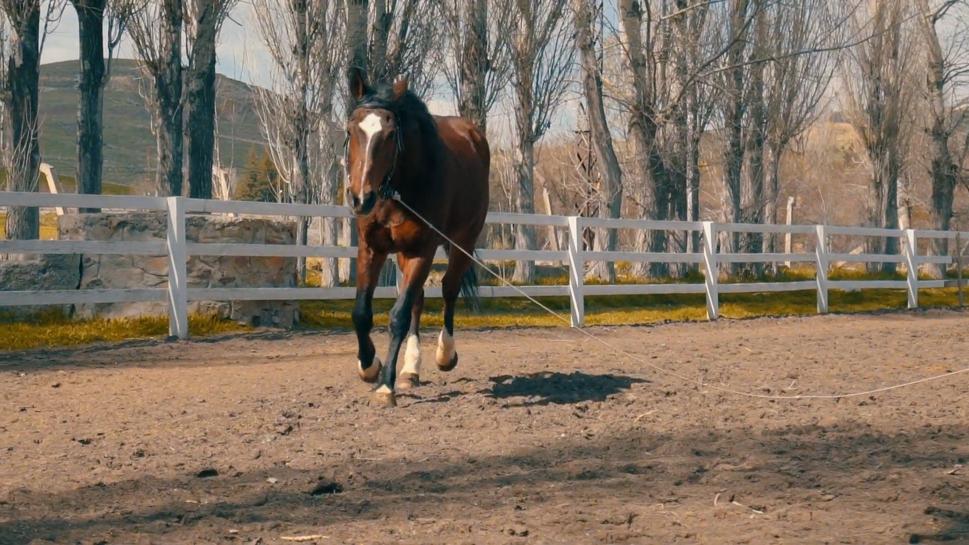 Horse Galloping Around A Ranch