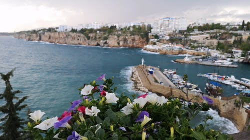 Beautiful Flowers In The View Of A Marina Along the Coastline