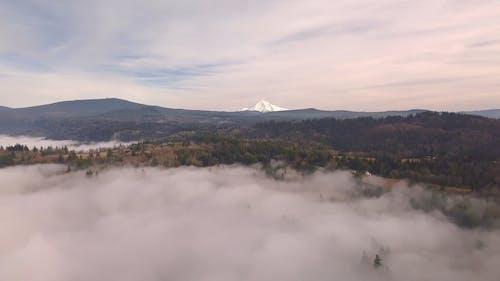 浓雾覆盖地面