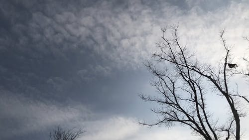 Clouds Passing In The Sky