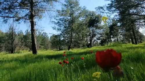 Red Flowers On Green Grassland