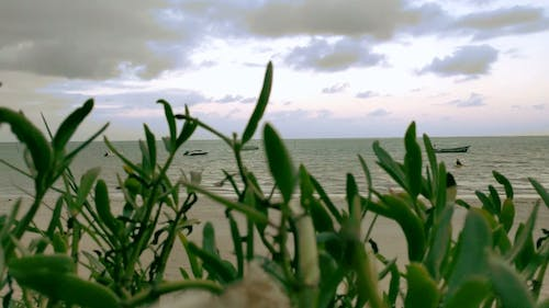 Plants Covering The View Of The Beach