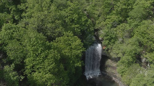 Waterfalls In The Middle Of A Forest