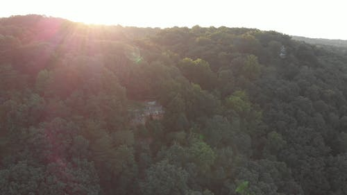 Drone Footage Of A Mountain Forest