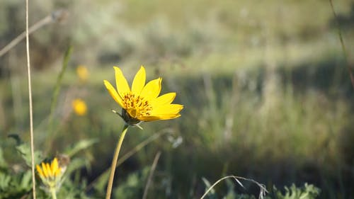 A Yellow Flower In Full Bloom