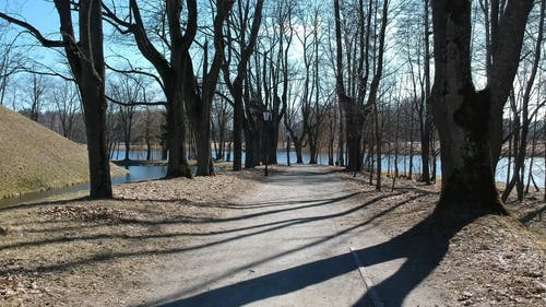 A Pathway With Trees In The Lake
