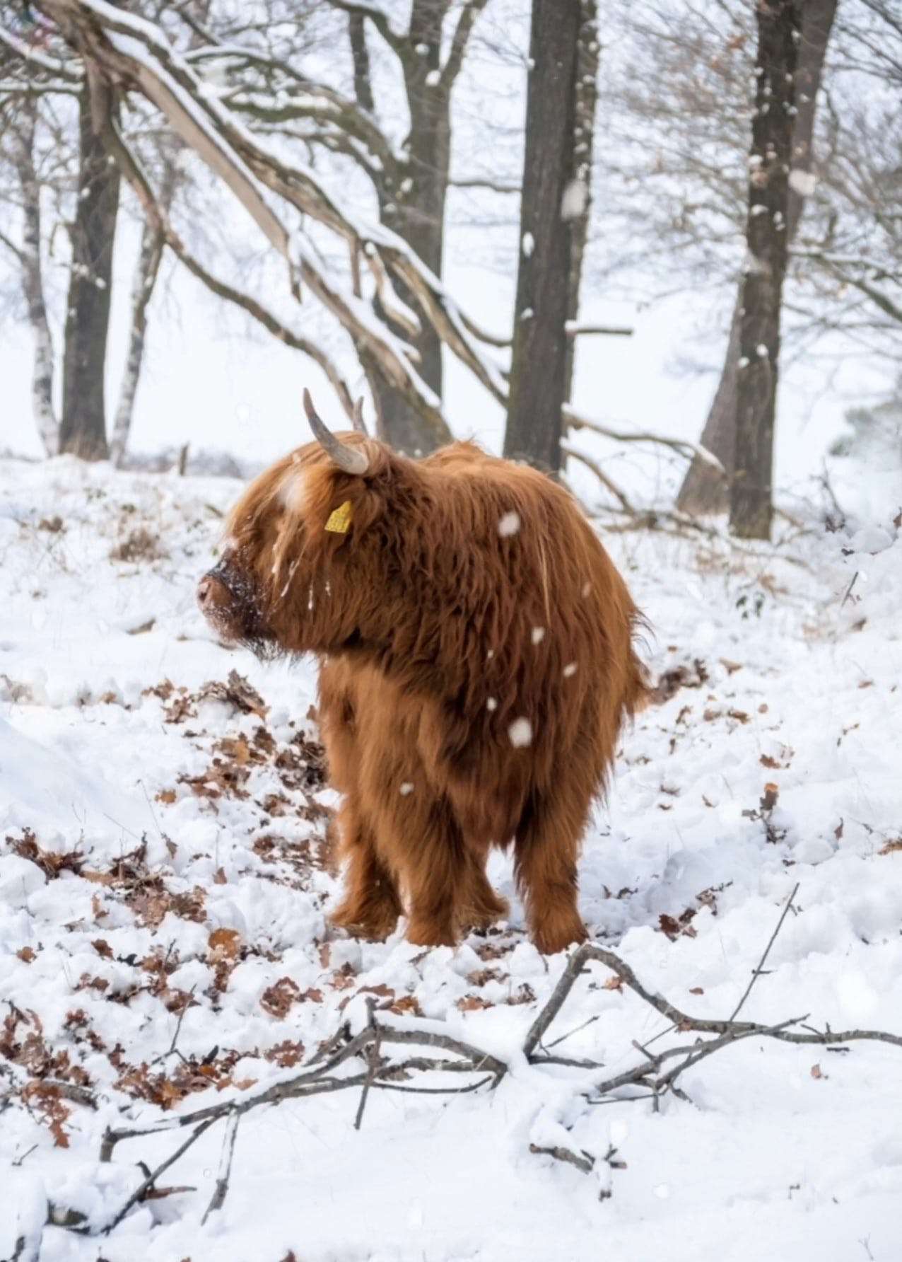 An Animal On A Winter Landscape