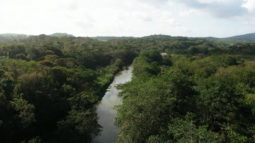 Aerial footage Of A River Surrounded by Thick Vegetation