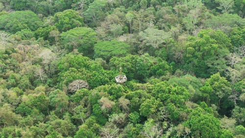 Aerial Footage Of A Jungle
