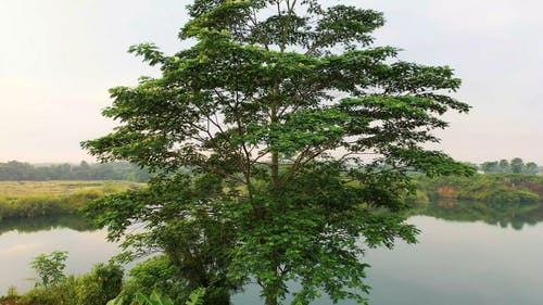 Lake Behind A Tall Tree