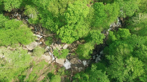 Aerial View Of Green Trees And A River