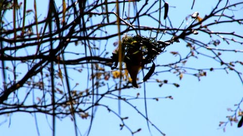 Bird Making A Nest On The Tree