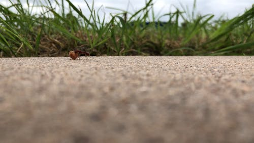 An Ant Collecting Foods For Storage