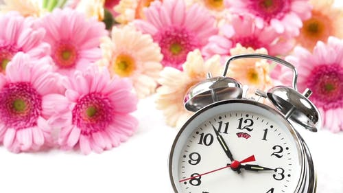 A Clock And Beautiful Flowers In Background