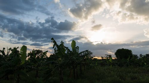 Time Lapse Footage Of Cloud Formation Over A Banana Plantation