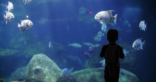 Boy Watching The Fishes In An Aquarium
