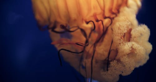 Close-Up View Of A Jellyfish