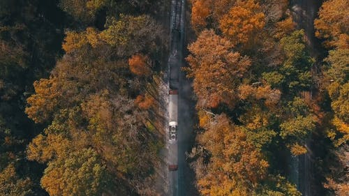 Aerial Footage Of A Train Going Through The Woods Full Of Trees With Autumn Leaves