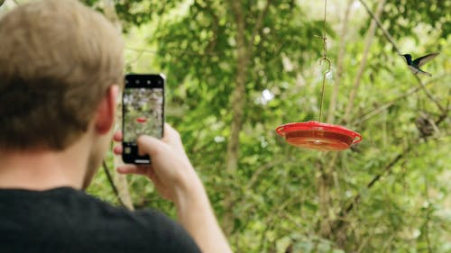 Slow Motion Footage Of A Man Taking A Picture Of Humming Birds While Feeding