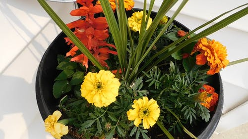 Colorful Flowers In A Pot